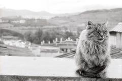Een mooie kat levend in de Guihua-tempel Songzan Royalty-vrije Stock Foto's