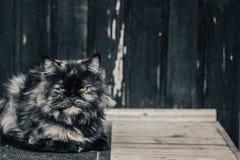 Een mooie kat ligt op de drempel van een dorpshuis Sluit omhoog tint stock foto