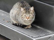 Een mooie kat Ontspan stemming stock afbeeldingen