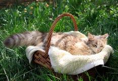 Een mooie kleurrijke kat die in een mand liggen stock afbeeldingen