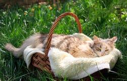 Een mooie kleurrijke kat die in een mand liggen royalty-vrije stock afbeeldingen