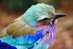 Een mooie, kleurrijke vogel Stock Foto