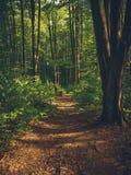 Een mooie kleurrijke weg door een herfstbos stock afbeeldingen