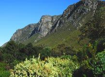 Een mooie landschapsmening van de bergen die Harold Porter Nation Botanical Gardens omringen dichtbij Cape Town, Zuid-Afrika royalty-vrije stock foto