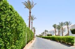 Een mooie levende omheining van groene struiken, installaties met bladeren in een tropische toevlucht met palmen en een wit gebou royalty-vrije stock afbeelding