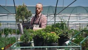 Een mooie mens met een baard die een tuinman dragen, die zeldzame wortel geschoten bomen en installaties laden in de kar De tuinm stock video