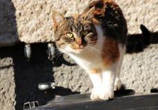 Een mooie multi gekleurde kat die zich op plastic bak bevinden en treft neer voor sprong voorbereidingen Zeer aardige groene ogen royalty-vrije stock afbeeldingen