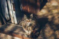 Een mooie oude kattenzitting op de ingang in het rustieke buitenhuis royalty-vrije stock afbeelding