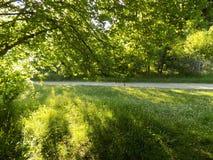 Een mooie parc royalty-vrije stock foto's