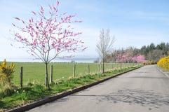 Een mooie privé weg in de lentetijd. Stock Afbeelding