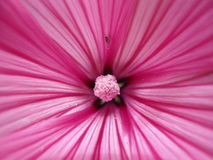 Een mooie purpere bloemmacro Stock Afbeeldingen