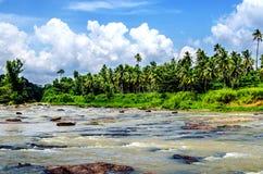 Een mooie rivier waarin de olifanten in het Pinnawala-Olifantsweeshuis, Sri Lanka baden royalty-vrije stock fotografie