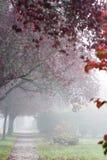 Een mooie tree-lined stoep door een mist; stock fotografie