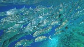 Een mooie troep van vissen zwemt voorbij de camera Het schieten onder water Zeer mooi onderwaterlandschap De stralen van de zon m stock video