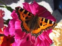 Een mooie vlinder Royalty-vrije Stock Afbeeldingen