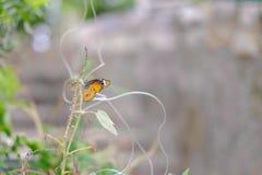 Een mooie vlinder Royalty-vrije Stock Foto