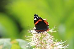 Een mooie vlinder Stock Foto