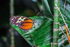 Een mooie vlinder op een bloem Stock Foto's