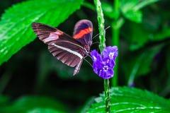 Een mooie vlinder op een bloem Stock Afbeeldingen