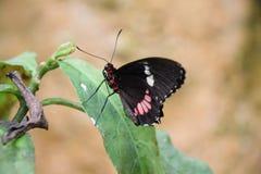 Een mooie vlinder op een groene installatie Stock Fotografie