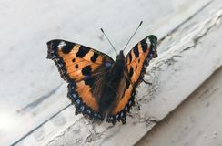 Een mooie vlinder op het venster stock fotografie