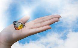 Een mooie vlinderzitting op vrouwenhand Royalty-vrije Stock Afbeeldingen