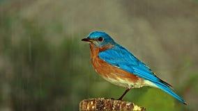 Een mooie vogel op Turk , bij het bos stock foto