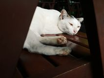 Een mooie witte kat bepaalde op een houten stoel en falled in slaap stock afbeelding