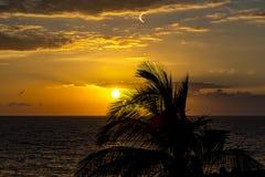 Een mooie zonsondergang op de kust van Costa Adeje, Tenerife, Spanje, met de contouren van een palm en een Zeemeeuw en contrails  stock foto's