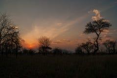 Een mooie zonsondergang in Serengeti stock foto