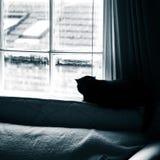 Een mooie zwarte kat die binnen leven Volwassen katachtig portret stock afbeeldingen