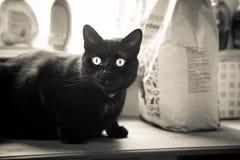 Een mooie zwarte kat die binnen leven Volwassen katachtig portret royalty-vrije stock afbeeldingen