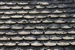 Een mos op het oude dak stock fotografie