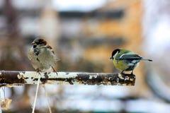 Een mus en een vogel op zoek naar voedsel royalty-vrije stock afbeelding