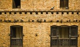 Een muur met vogels Stock Afbeeldingen