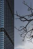Een naakte boom en een wolkenkrabber Stock Afbeelding