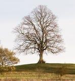 Een naakte boom op de heuvel stock foto's