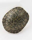 Een Naakte Schildpad Shell Royalty-vrije Stock Afbeelding