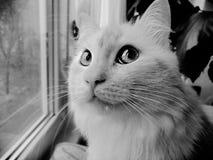 Een nadenkende kat Tom stock afbeelding