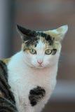 Een nadenkende kleine kat stock afbeelding
