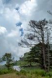 Een nat wegregenwater op de berg en de bomen stock fotografie