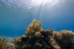 Een natuurlijk licht schot van een koraalrif Royalty-vrije Stock Afbeeldingen