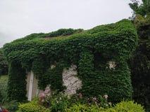 Een natuurlijk mooi die huis in klimplant wordt behandeld royalty-vrije stock foto