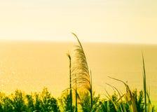 Een natuurlijke landschapsfoto Stock Afbeelding