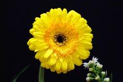 Een natuurlijke zon, de gele bloem stock foto's