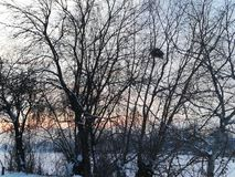 Een nest in een boom in een de winterlandschap dat wordt verloren royalty-vrije stock fotografie