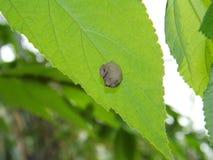 Een nest wordt gebouwd achter een groen blad stock afbeeldingen