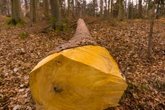 Een nette boomstam in het hout Royalty-vrije Stock Afbeeldingen