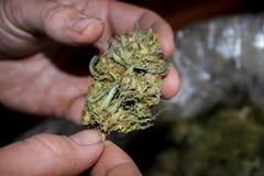 Een niet geknipte knop die van de cannabismarihuana in een man hand worden gehouden - selectieve nadruk royalty-vrije stock foto