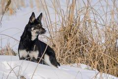 Een niet rashond bevindt zich wachtend op het spel De winter Het bevroren meer stock foto